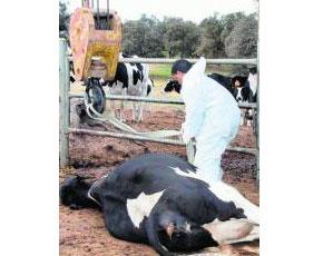 Ya hay 2 muertos en Castilla y León por  'las vacas locas'